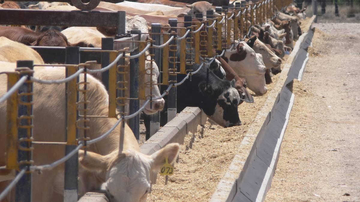 Australianos destacan fuerte demanda internacional por carne terminada a granos